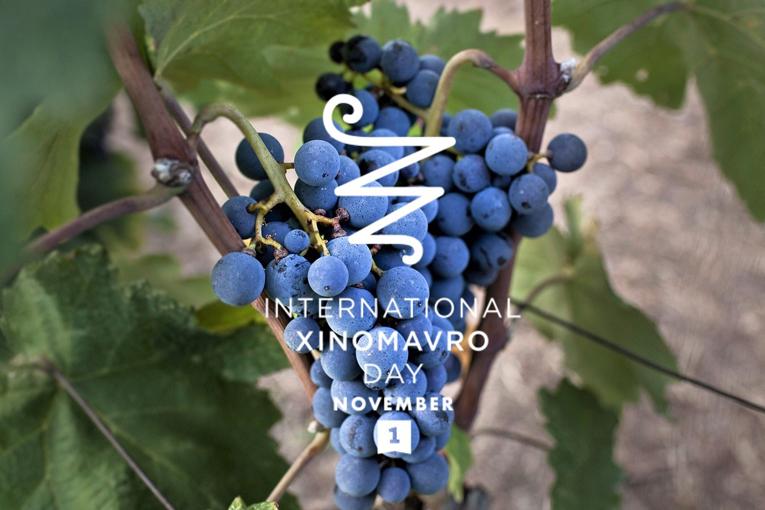 International Xinomavro Day – November 1